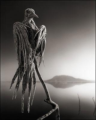 Aves-petrificadas-de-Nick-Brandt