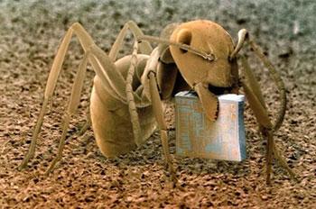 hormiga microscopio