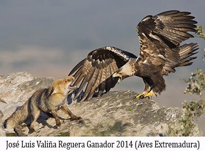 Aves-de-FIO 2014 Extremadura-Jose-Luis-Reguera