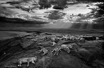 Wild life photographer 2014